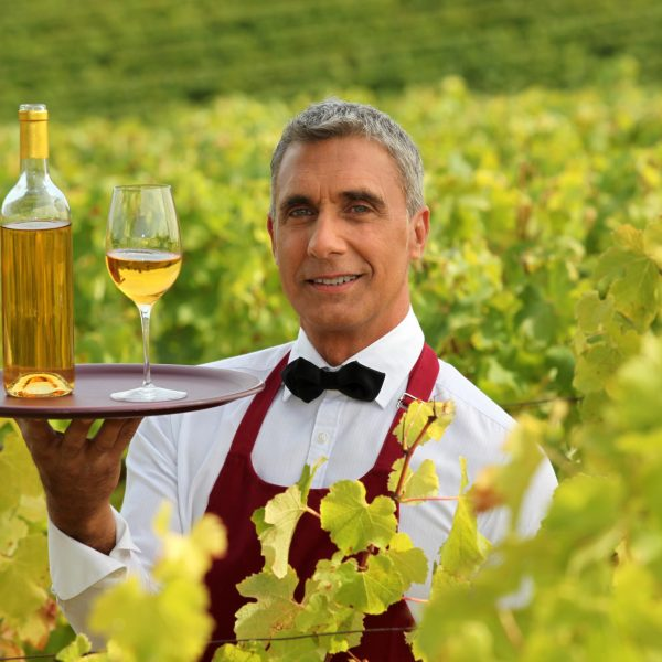 Wine waiter in the middle of vineyards